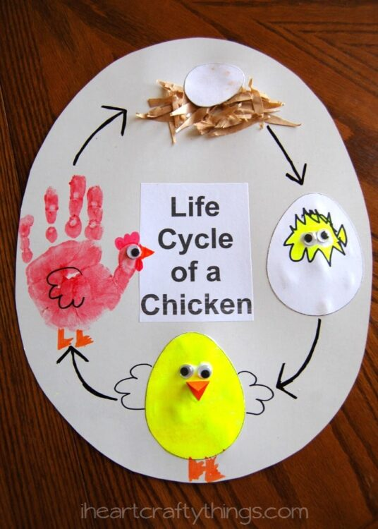 Life Cycle of a Chicken | I Heart Crafty Things