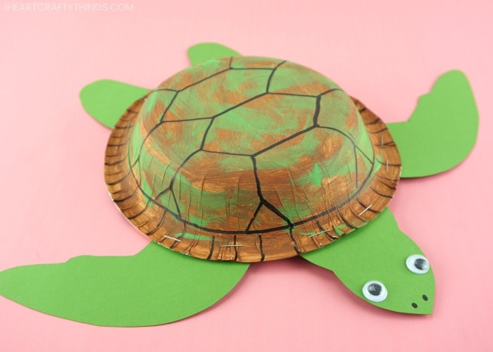 horizontal zoomed in front view image of sea turtle craft