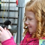 Baby Animal Days at USU Botanical Gardens (Family Pass Giveaway)