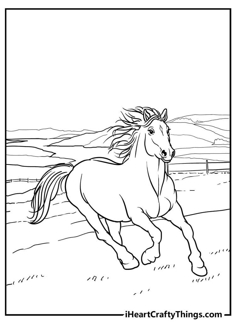 Horse_13
