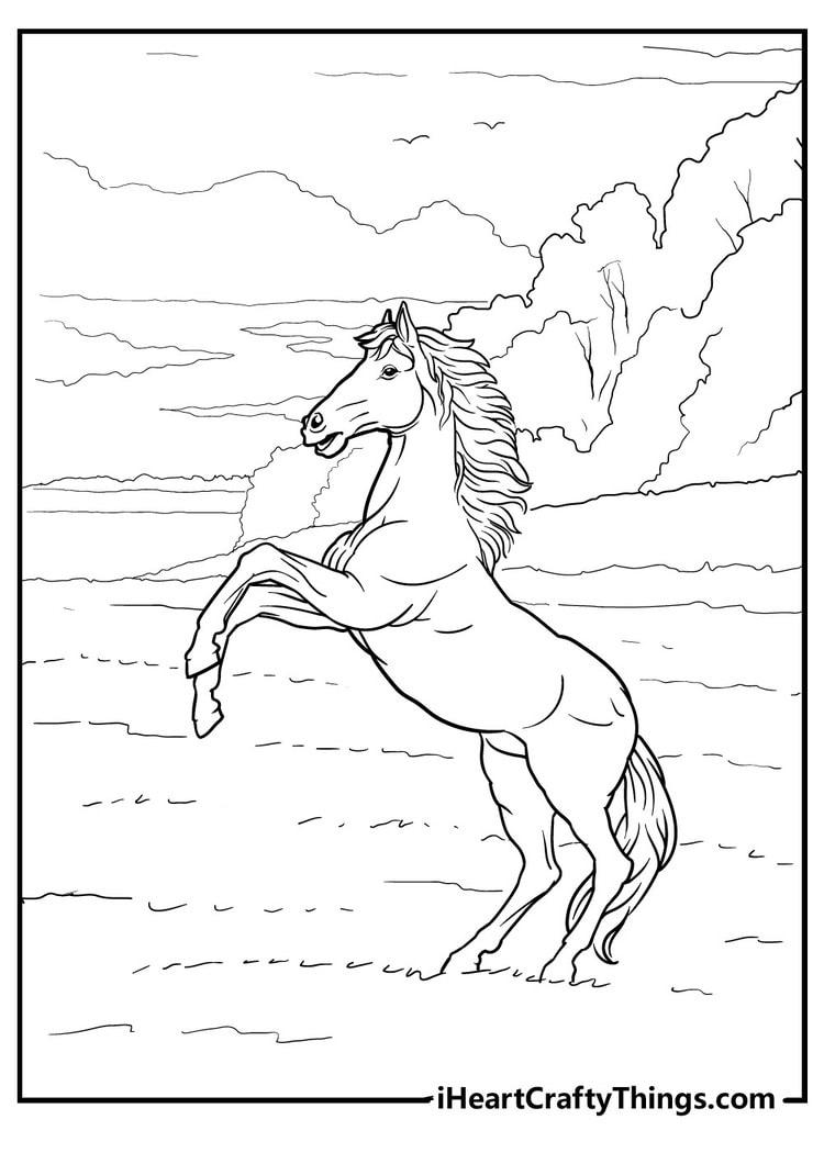 Horse_14