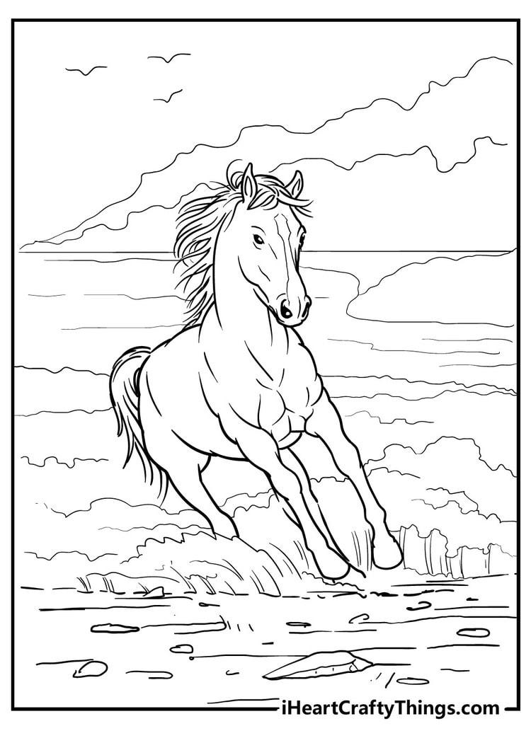 Horse_15