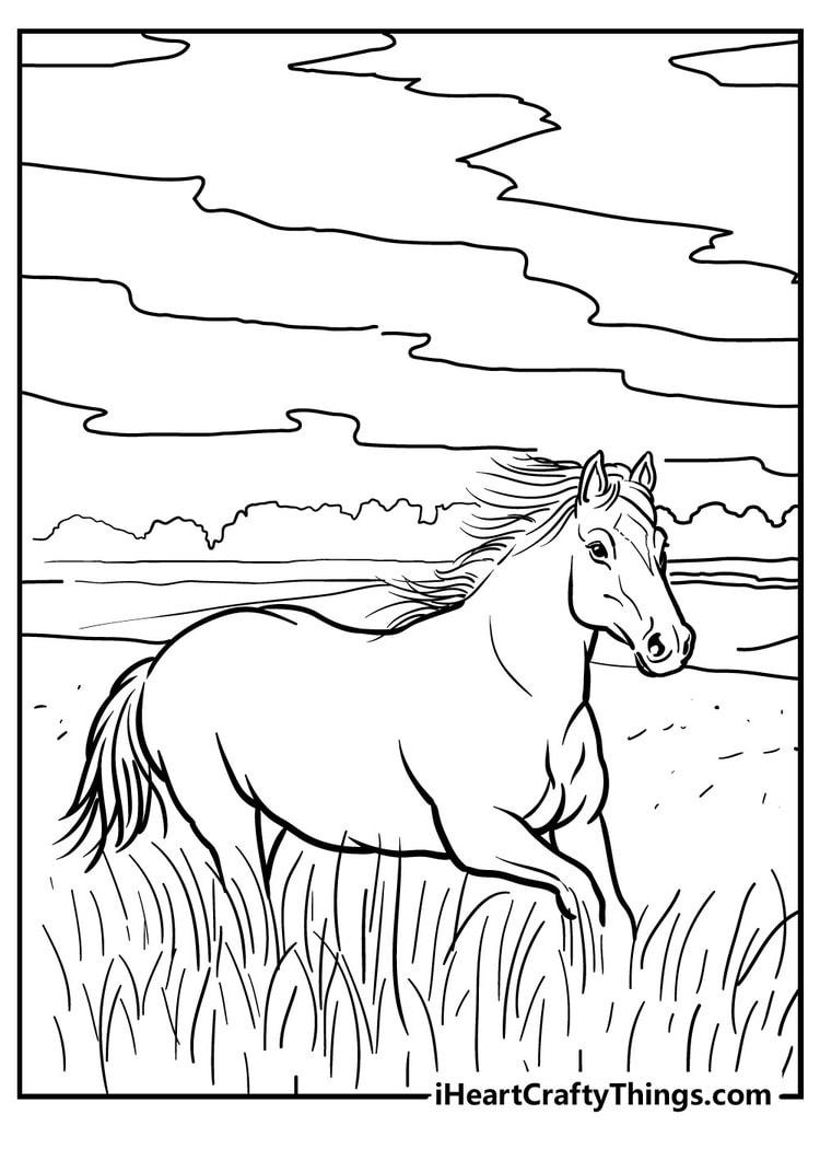Horse_16