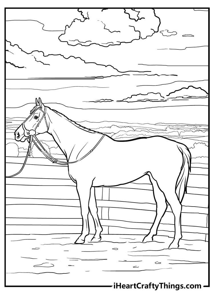 Horse_17