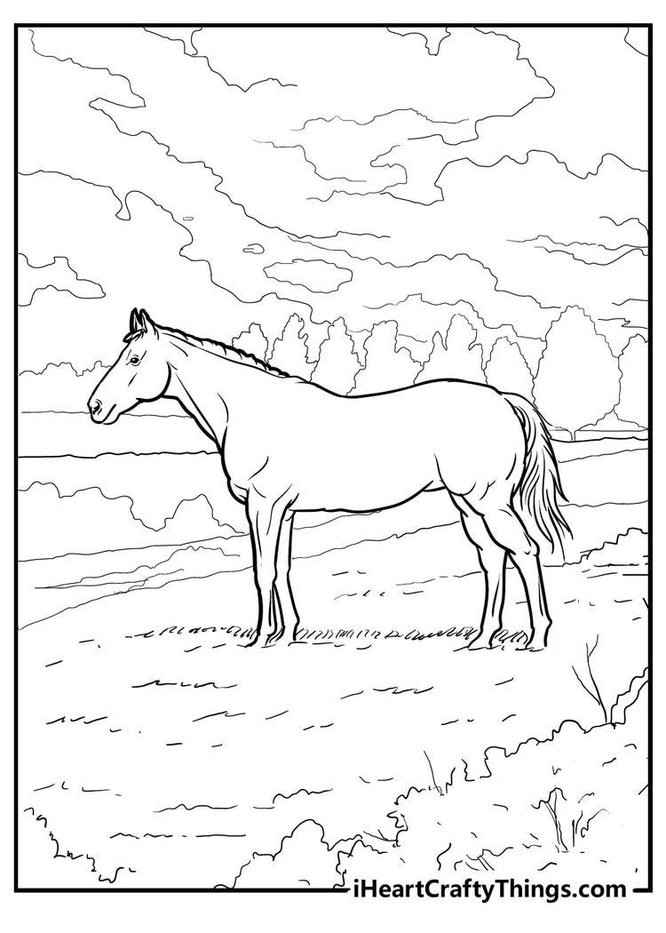Horse_23