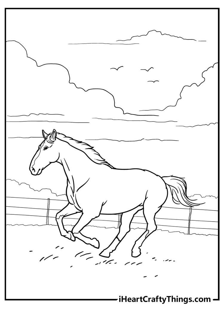 Horse_27
