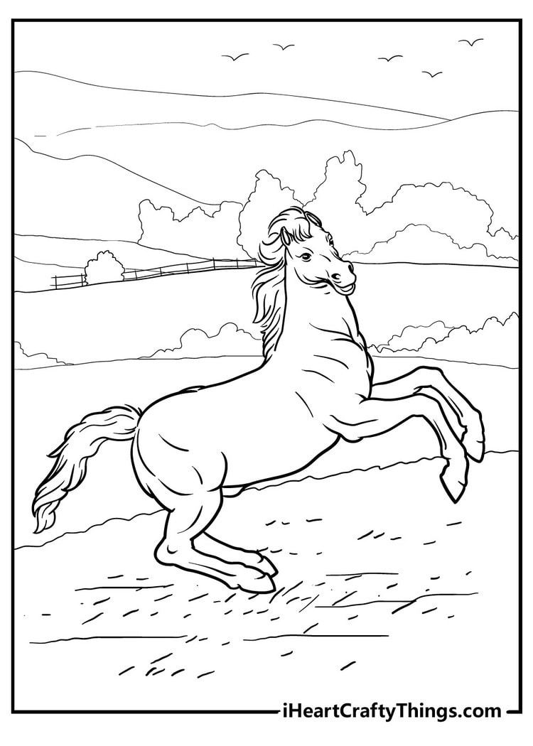 Horse_28