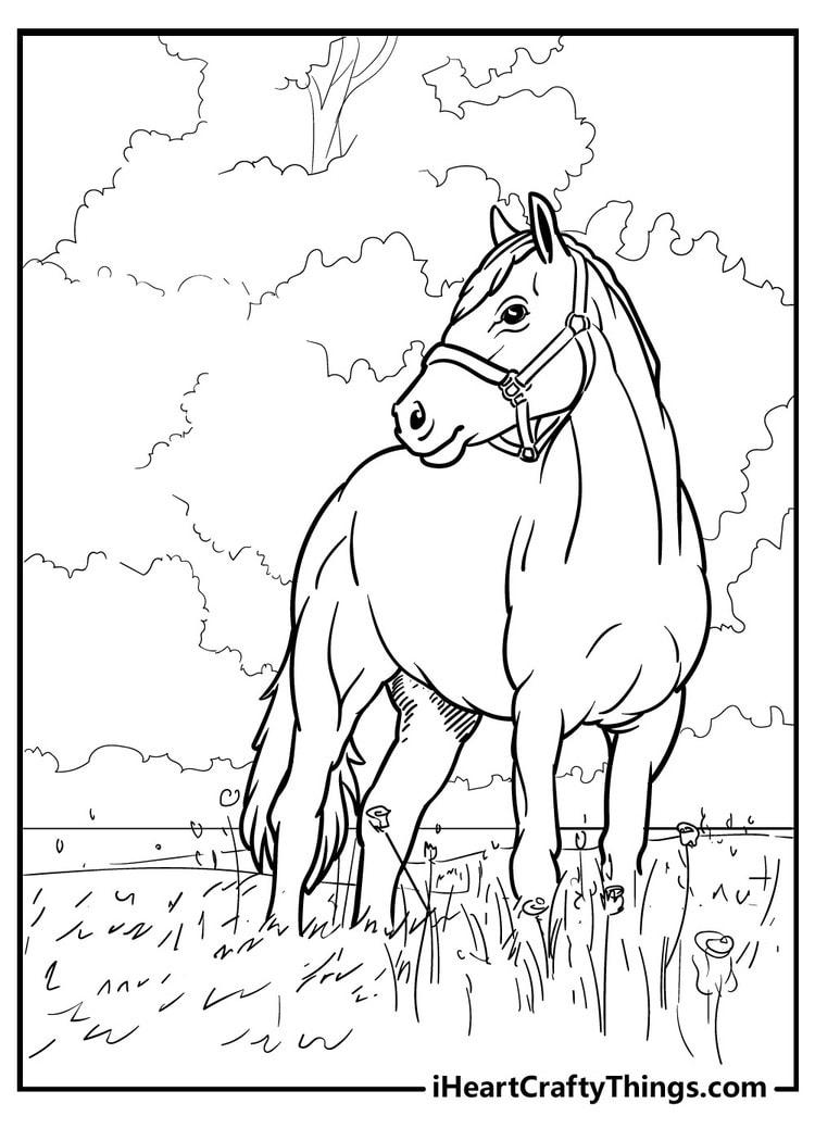 Horse_4