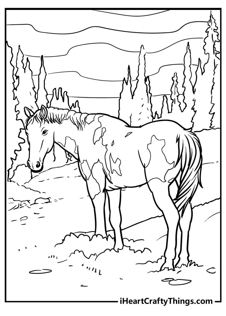 Horse_9