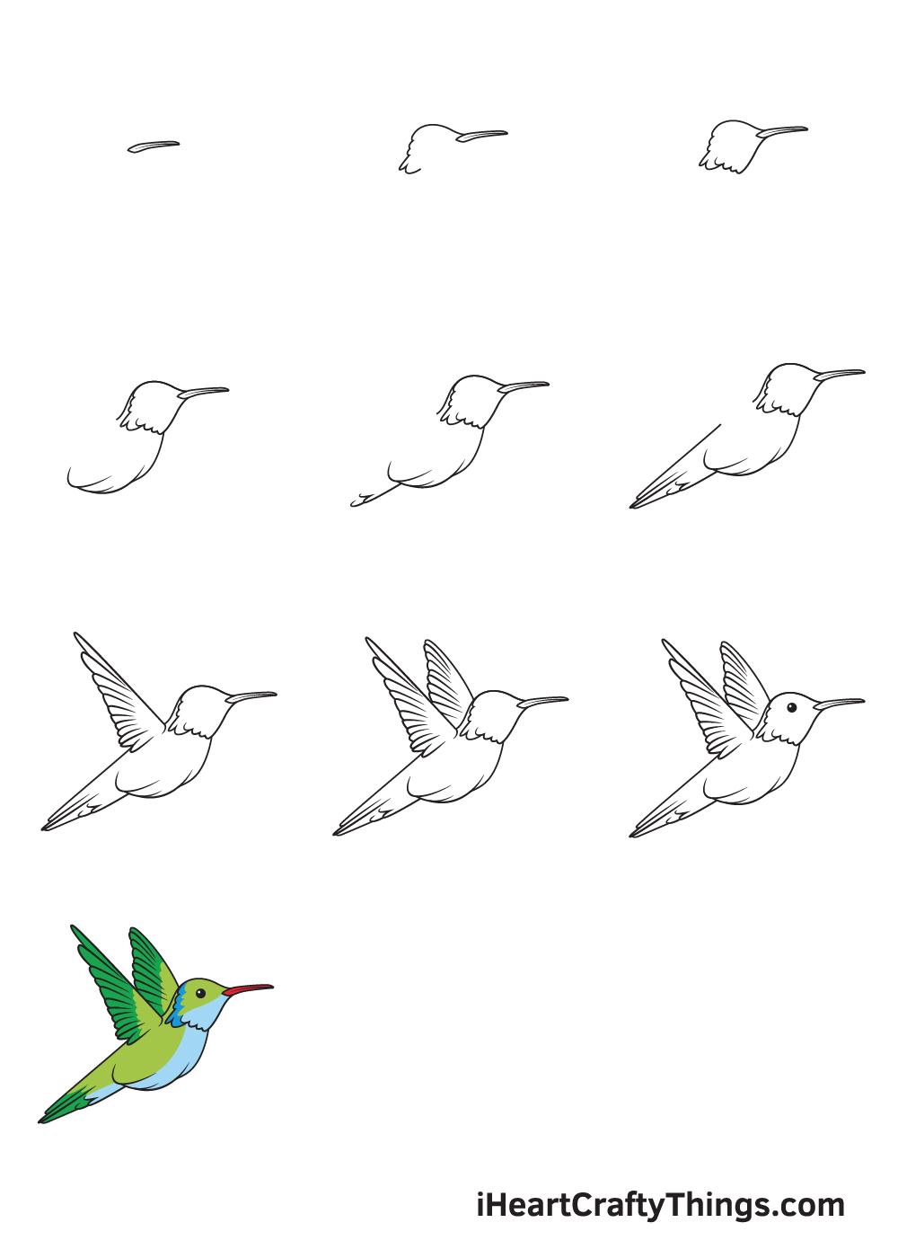 drawing hummingbird in 9 steps