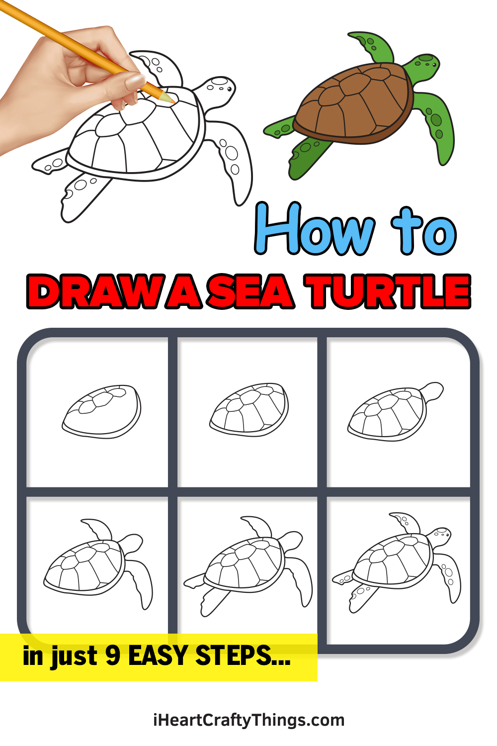 How to Draw a Sea Turtle in 9 Easy Steps