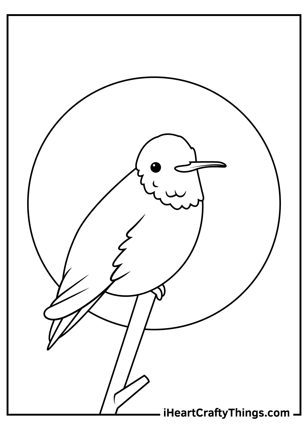 black and white hummingbird coloring pages