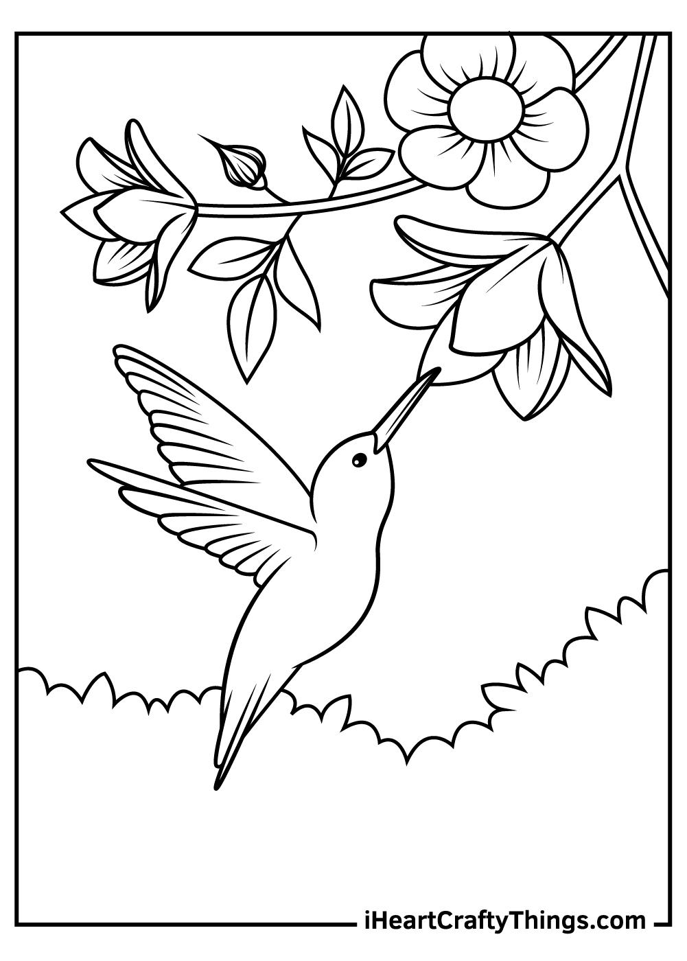 mini hummingbird coloring pages free printable