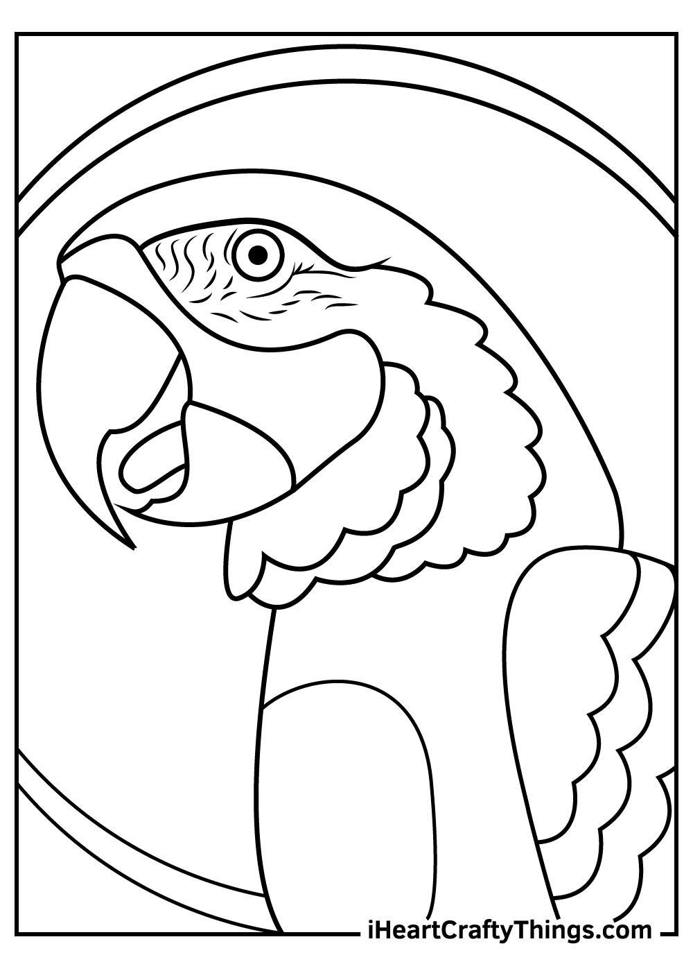 pirate parrots coloring pages