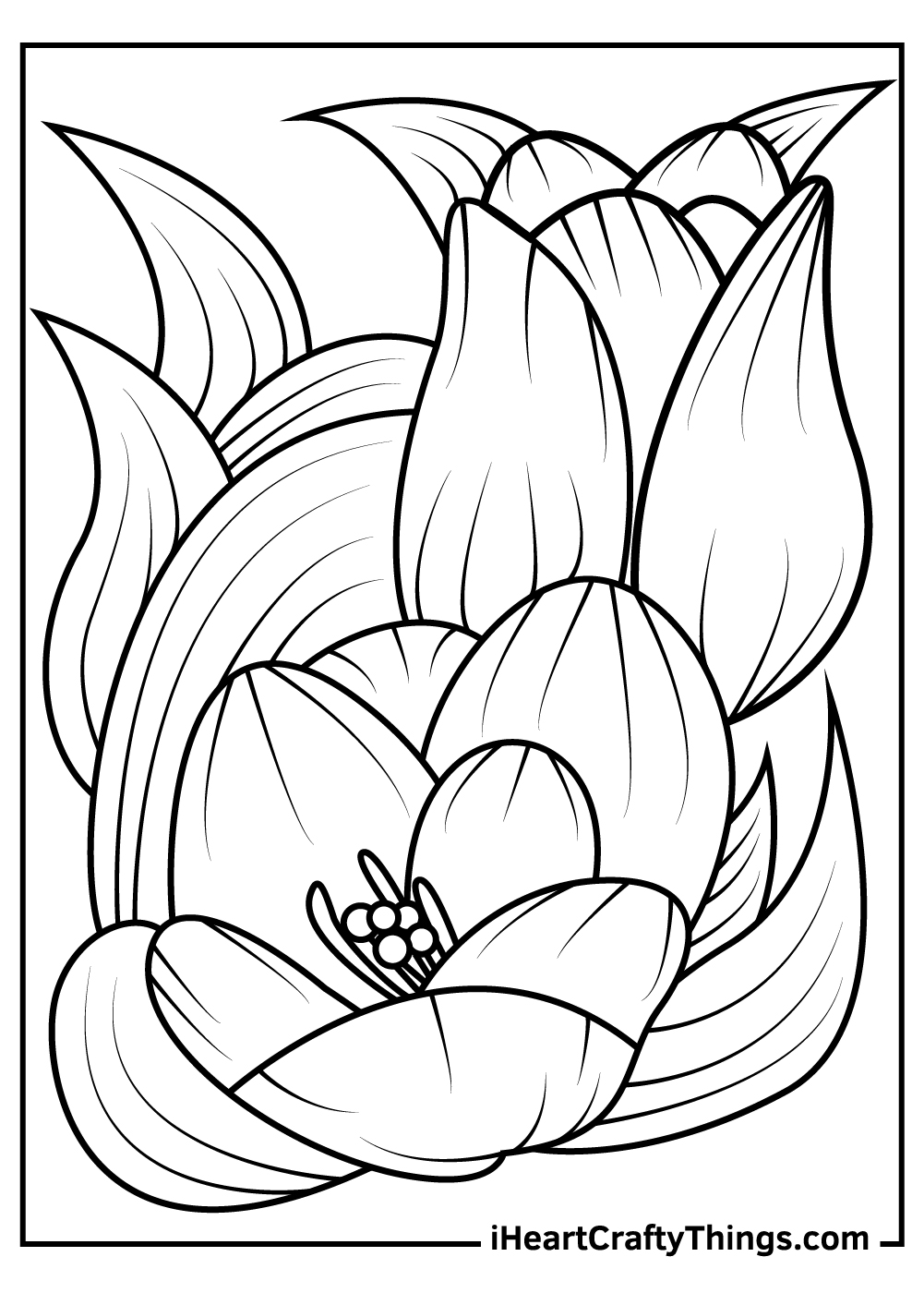 printable tulip coloring pages for kids