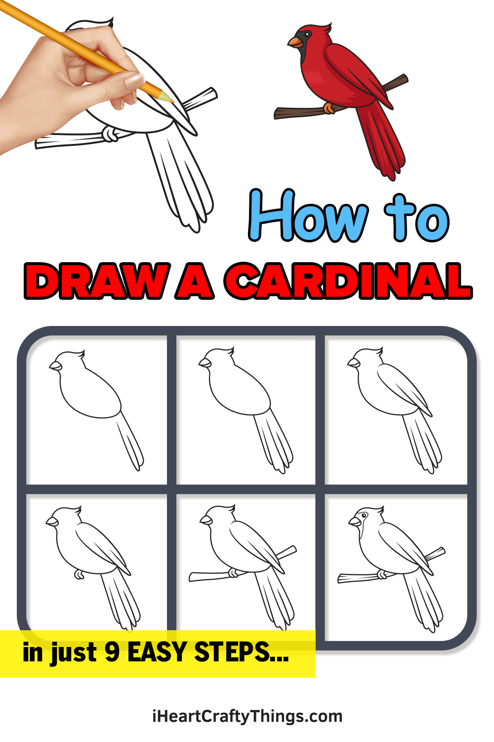 how to draw a cardinal in 9 easy steps