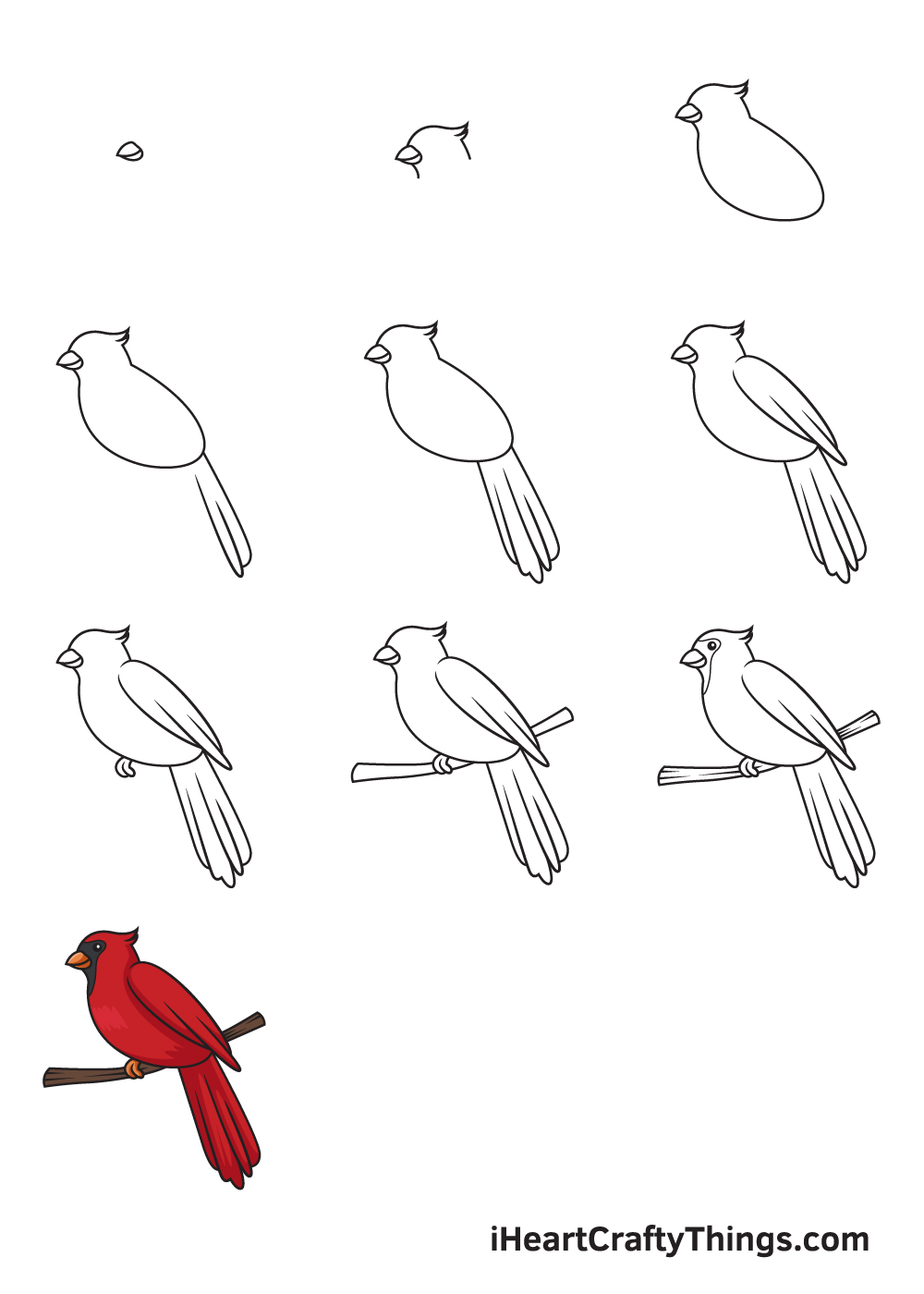 drawing cardinal in 9 easy steps
