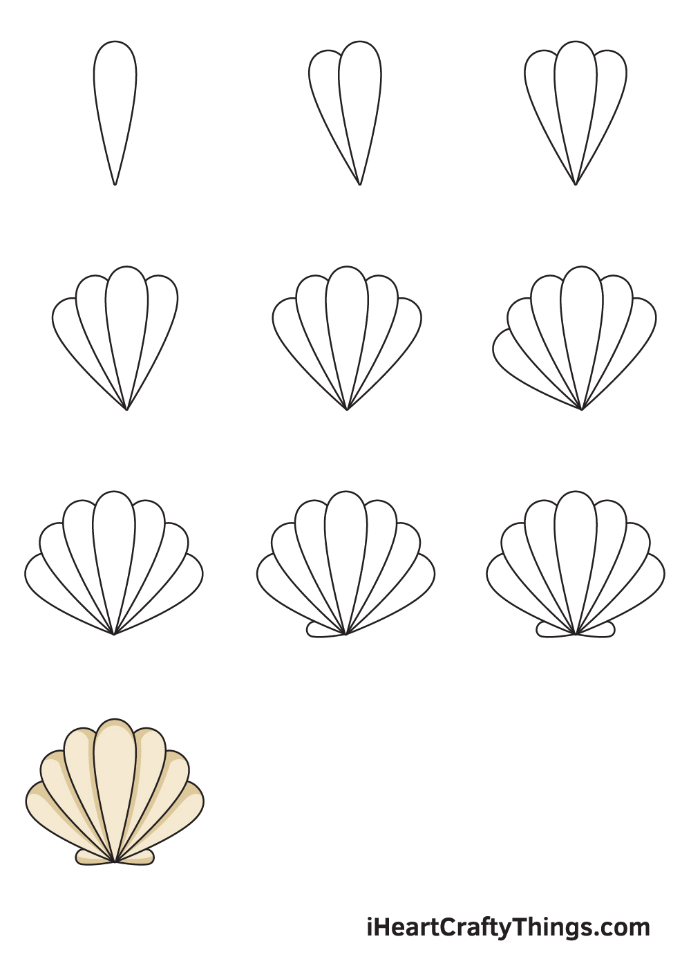 drawing seashell in 9 steps
