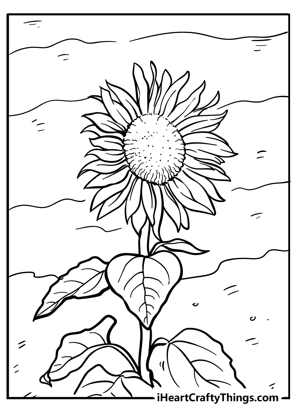 new sunflower coloring pages free printable