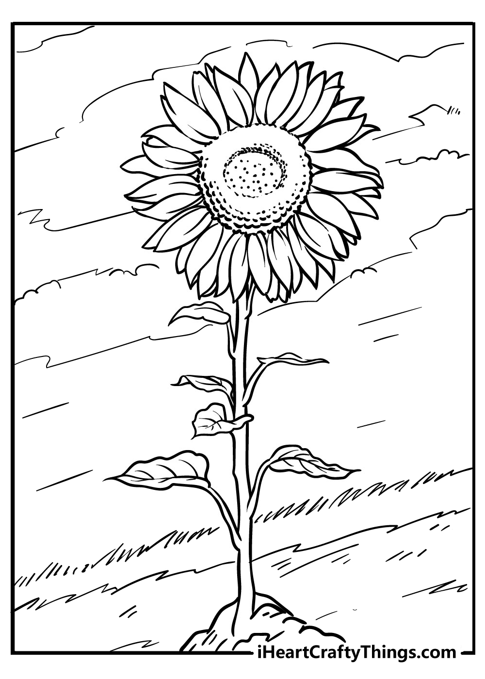 black and white sunflower colouring images