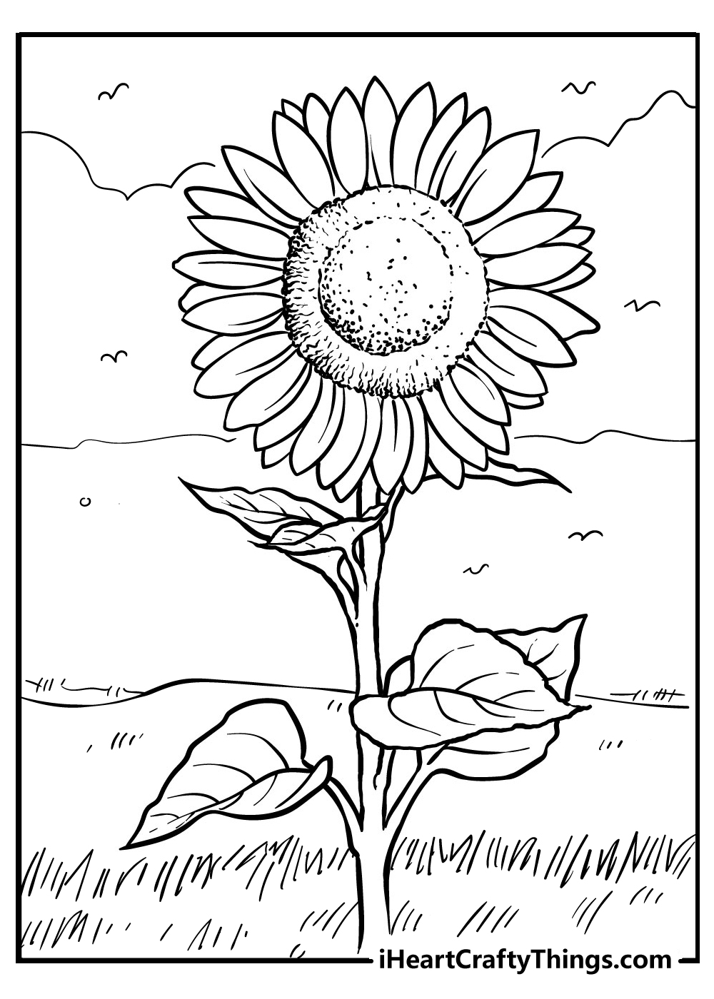 free printable sunflower coloring images for adults