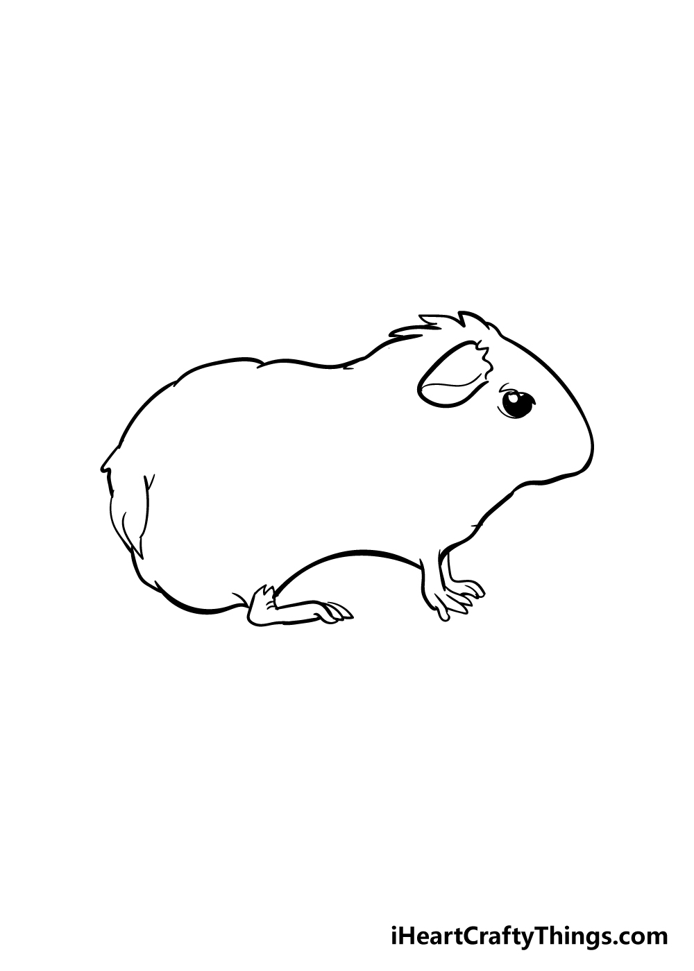 guinea pig drawing step 3