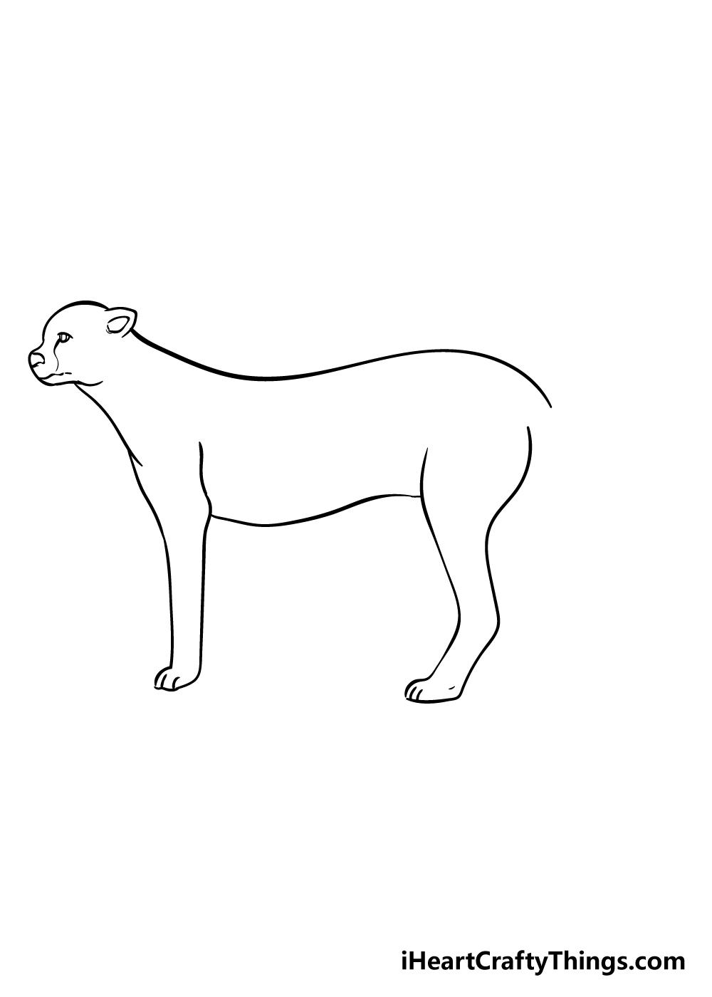cheetah drawing step 5