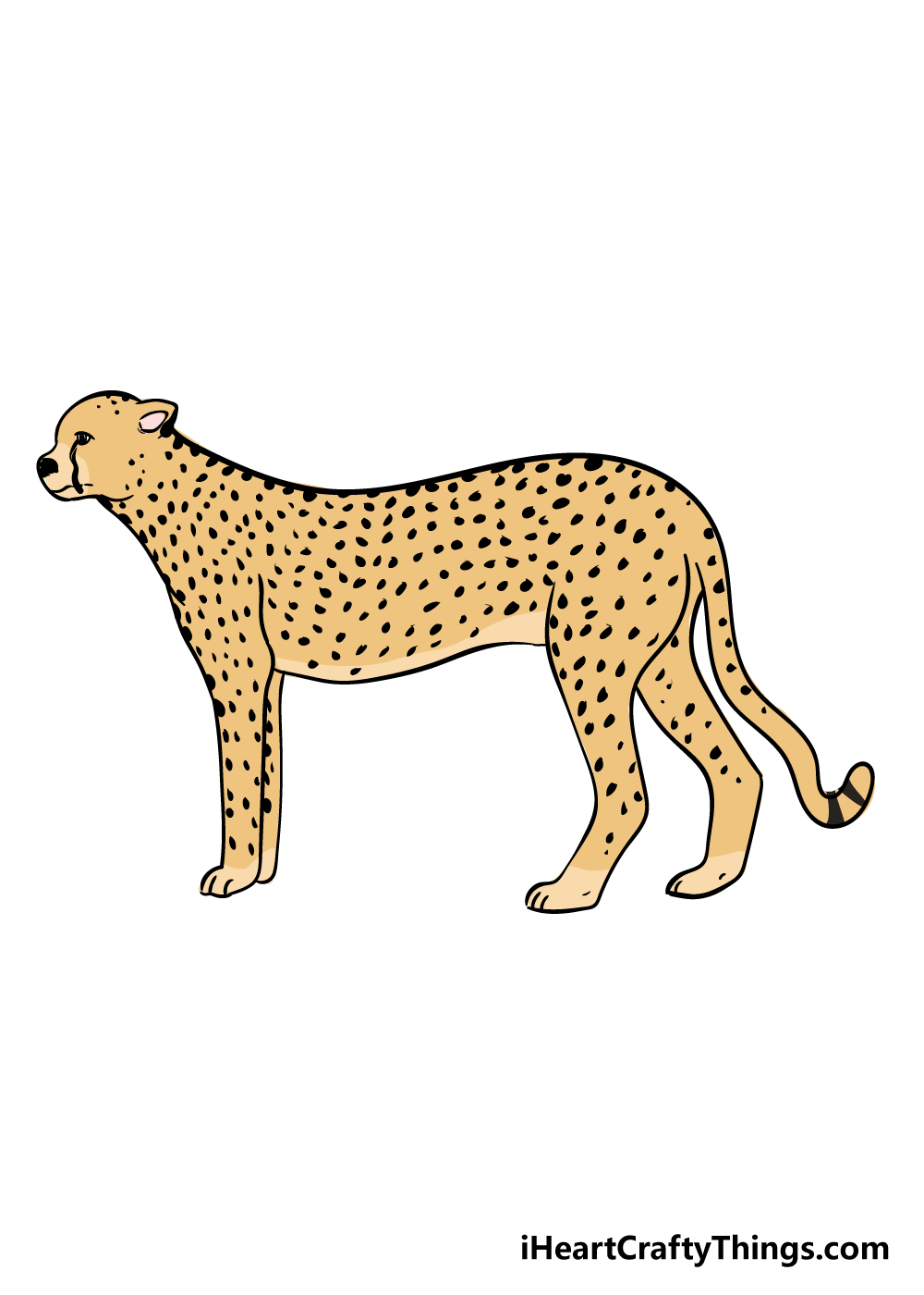 cheetah drawing step 9