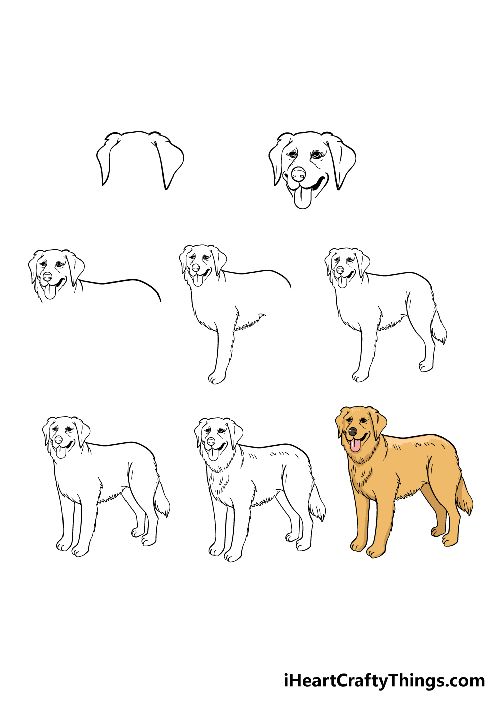 how to draw golden retriever in 8 steps