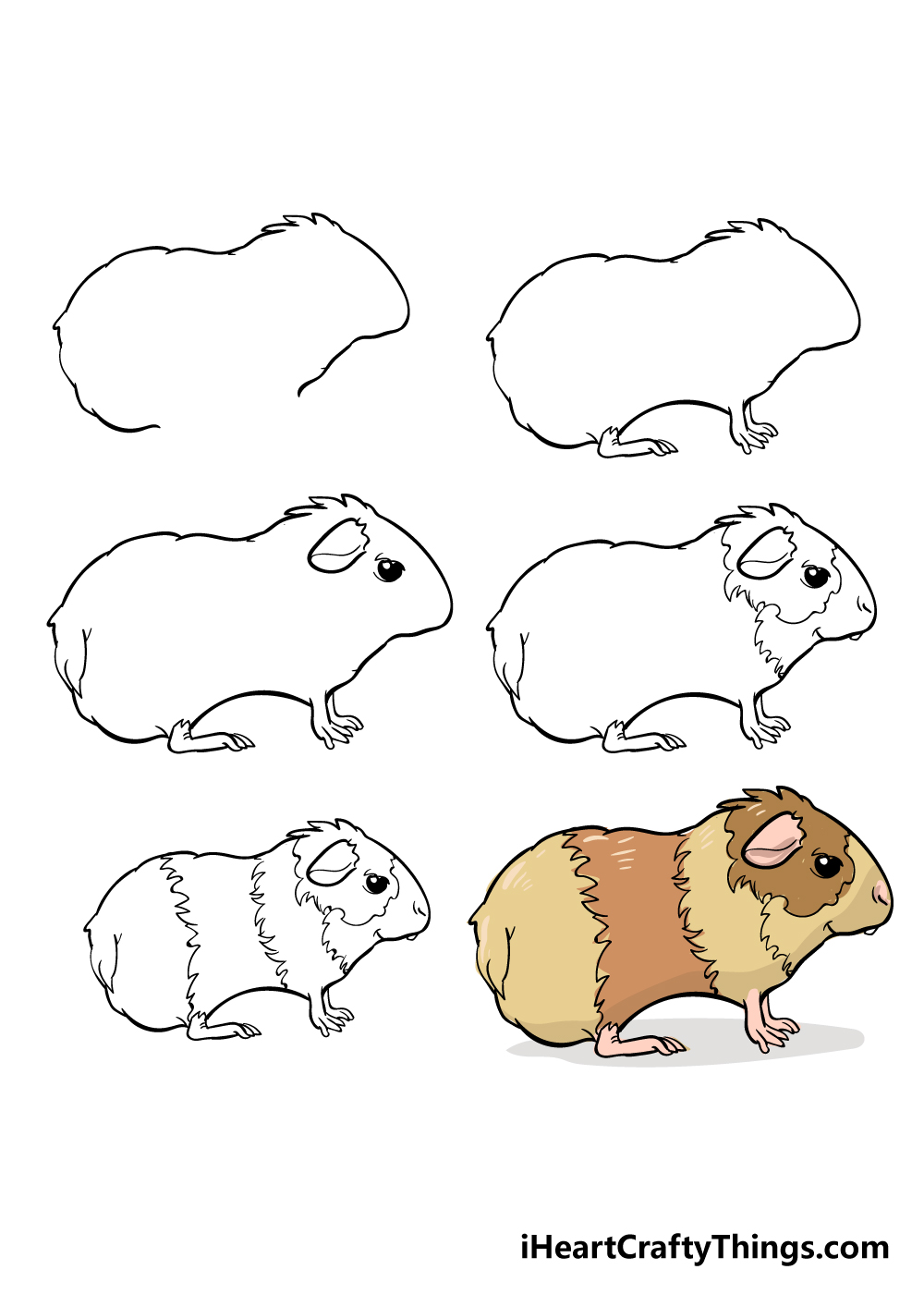 how to draw guinea pig in 6 steps