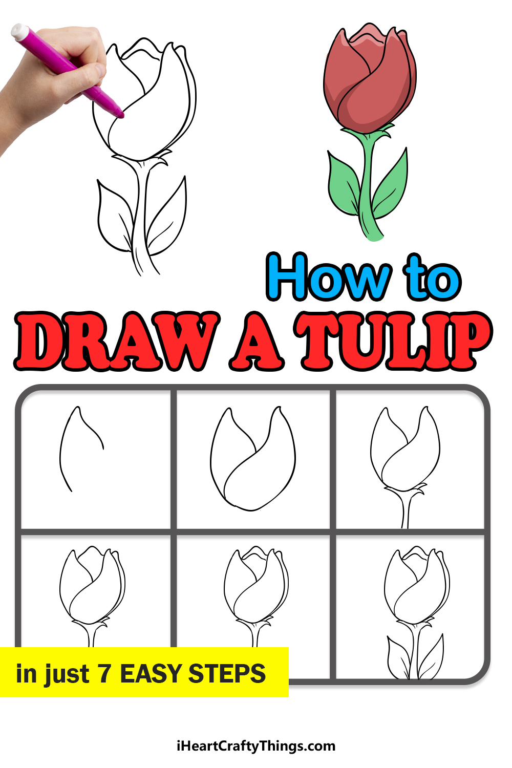 how to draw a tulip in 7 easy steps