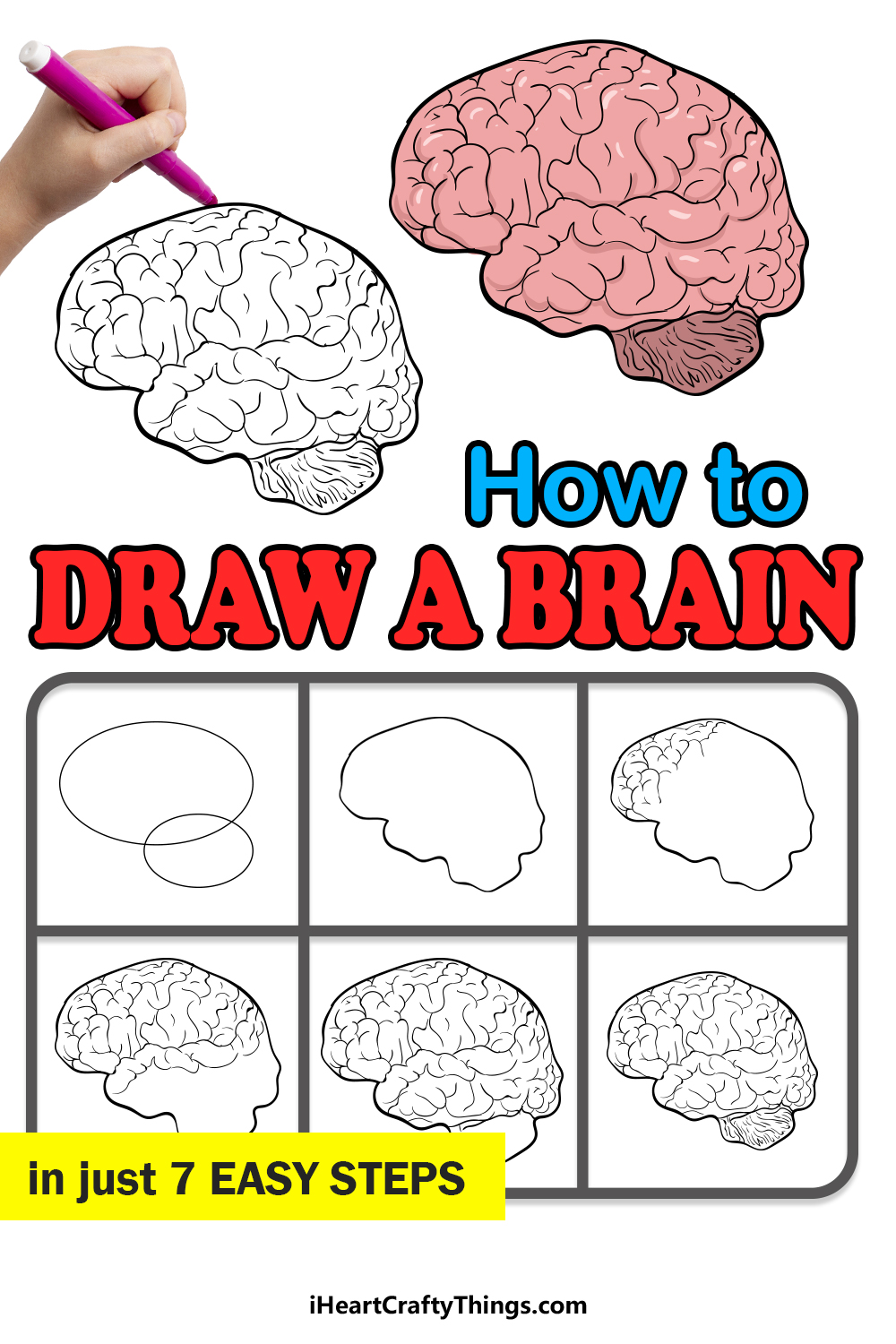 how to draw a brain in 7 easy steps