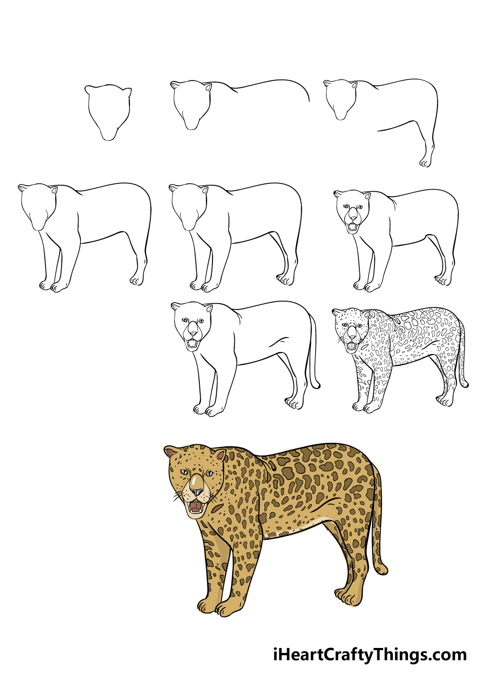 how to draw jaguar in 9 steps