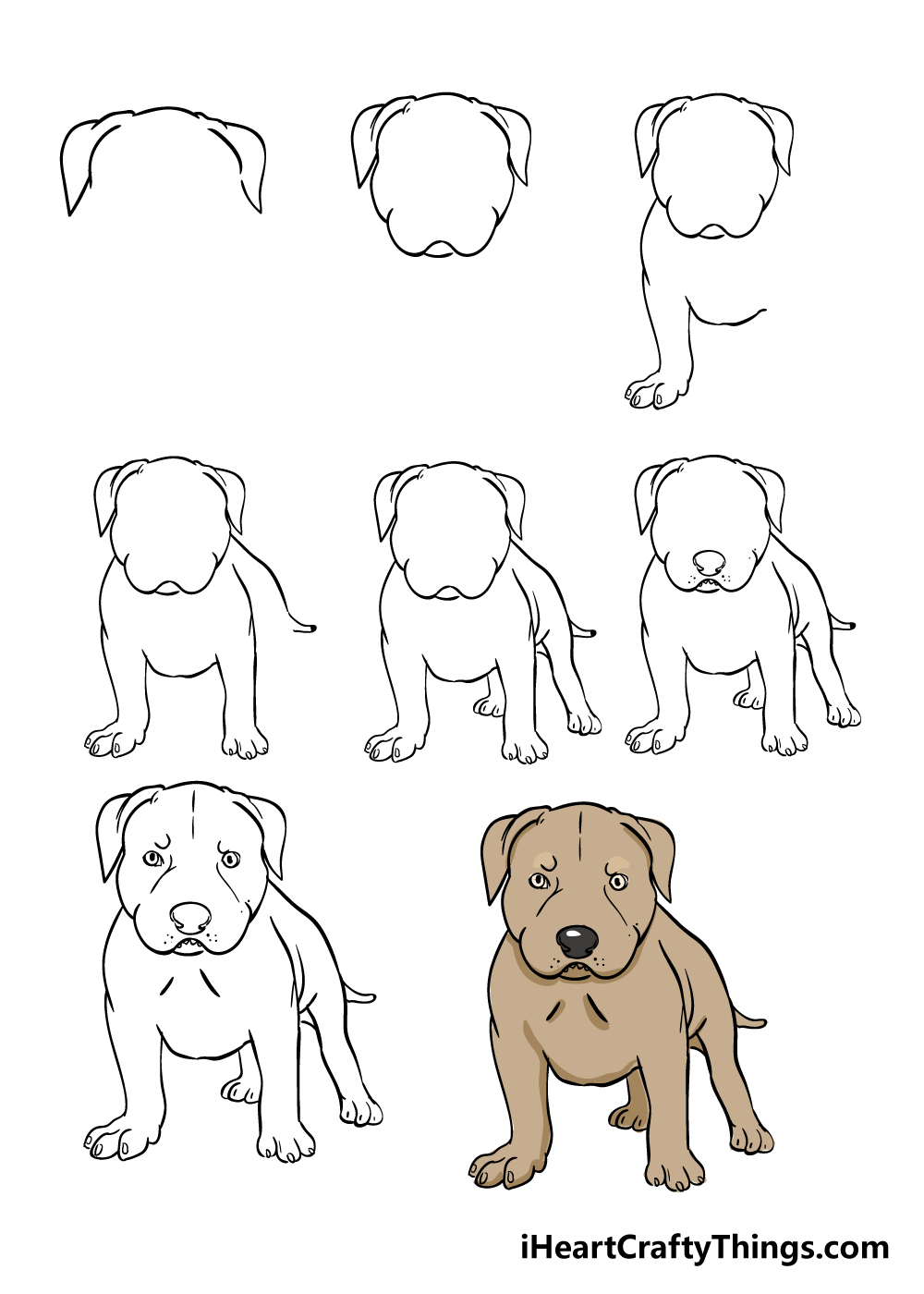 how to draw pitbull in 8 steps