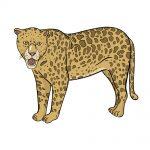how to draw jaguar image