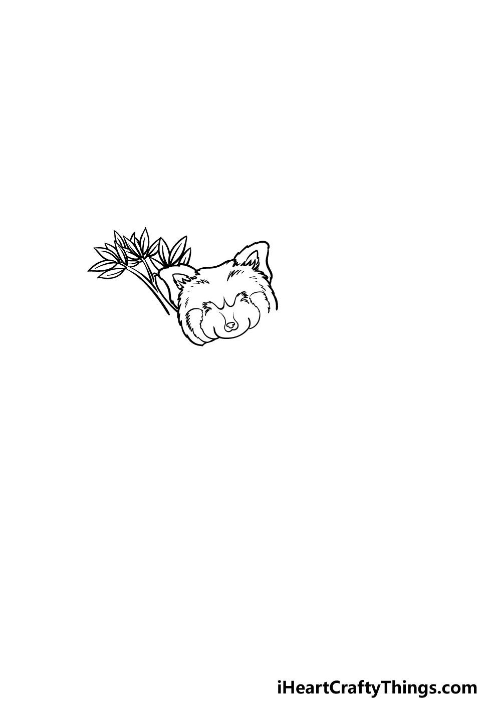 drawing a Red Panda step 2