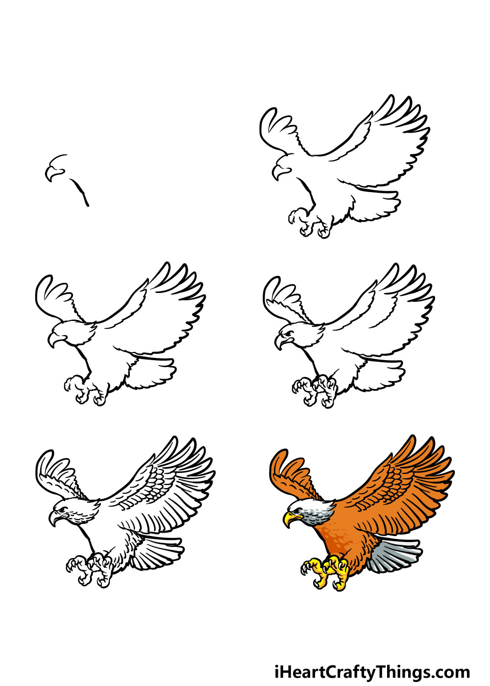 how to draw a bald eagle in 6 steps