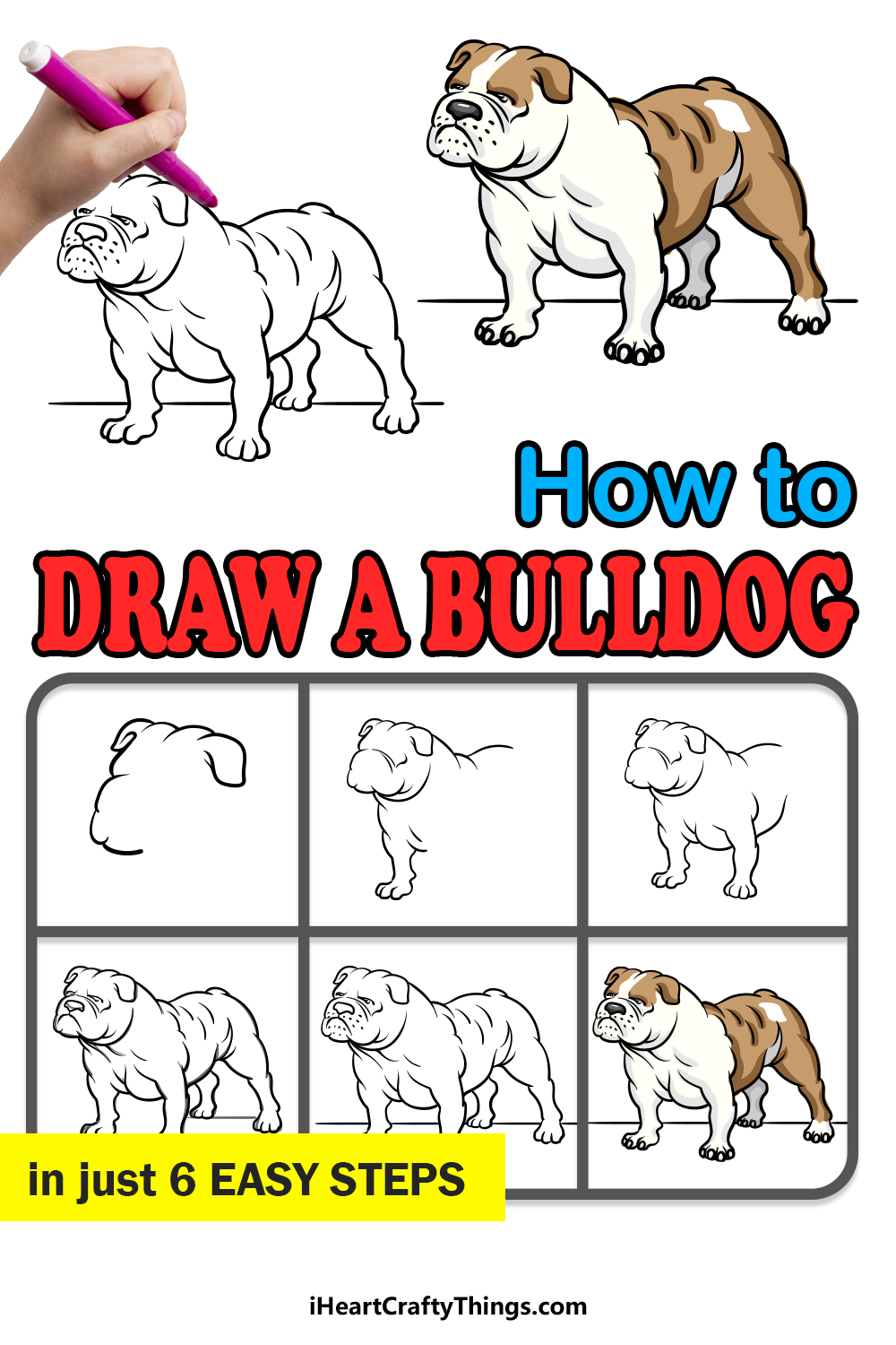 how to draw a bulldog in 6 easy steps