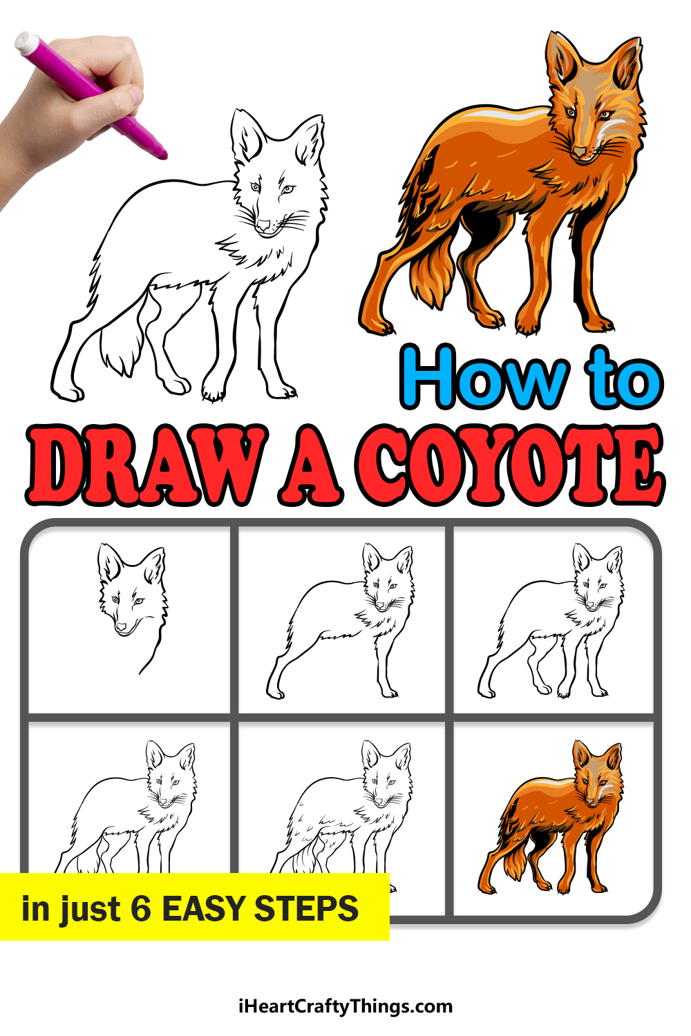 how to draw a coyote in 6 easy steps