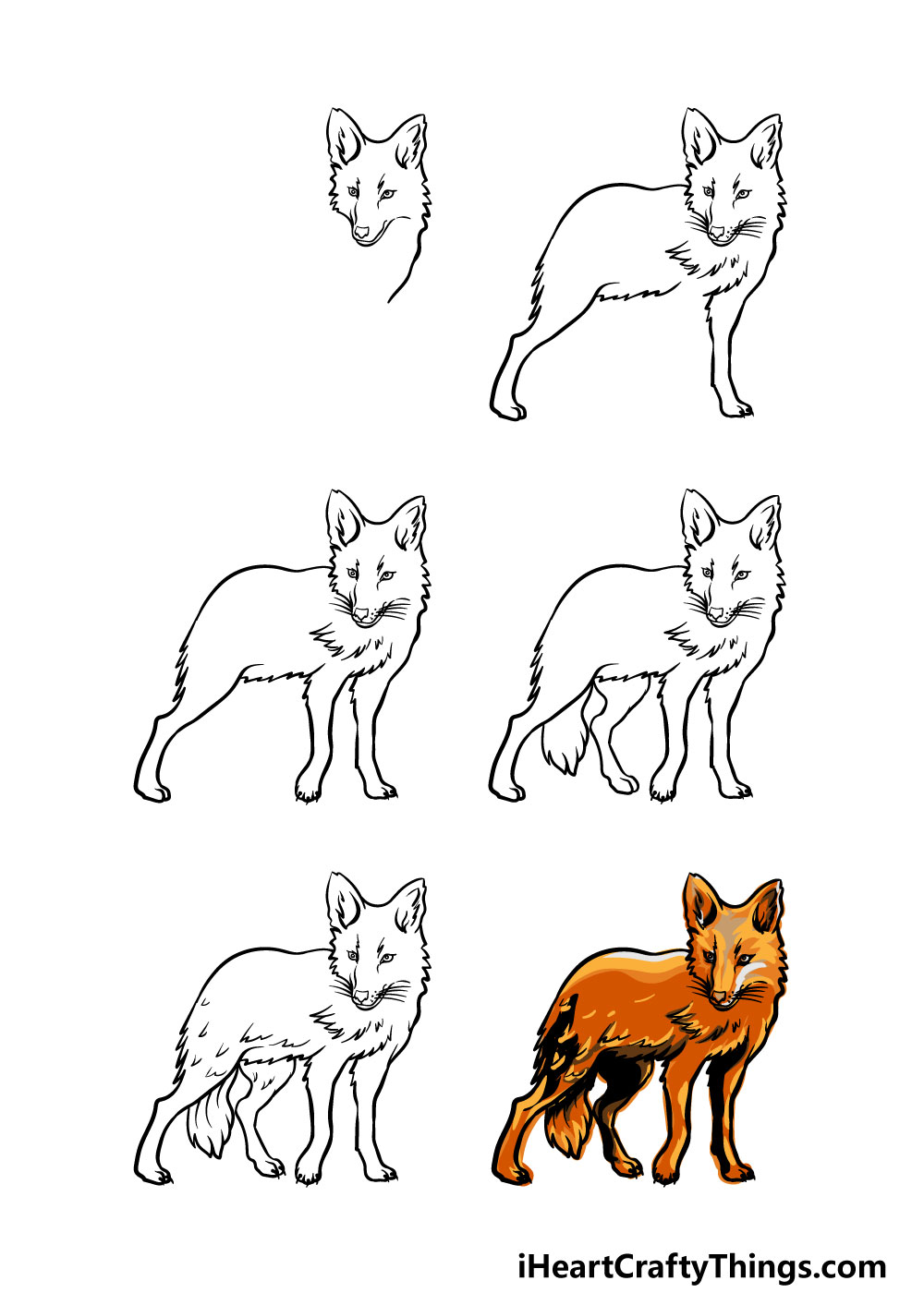 how to draw a coyote in 6 steps