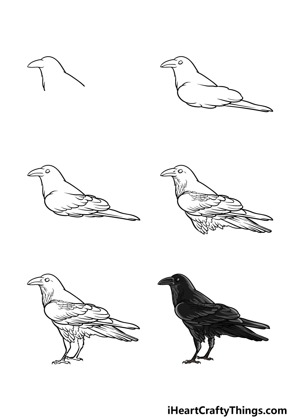 how to draw a crow in 6 steps