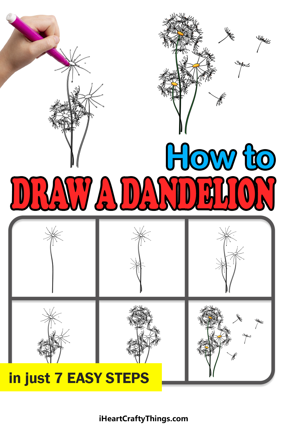 how to draw a dandelion in 7 easy steps
