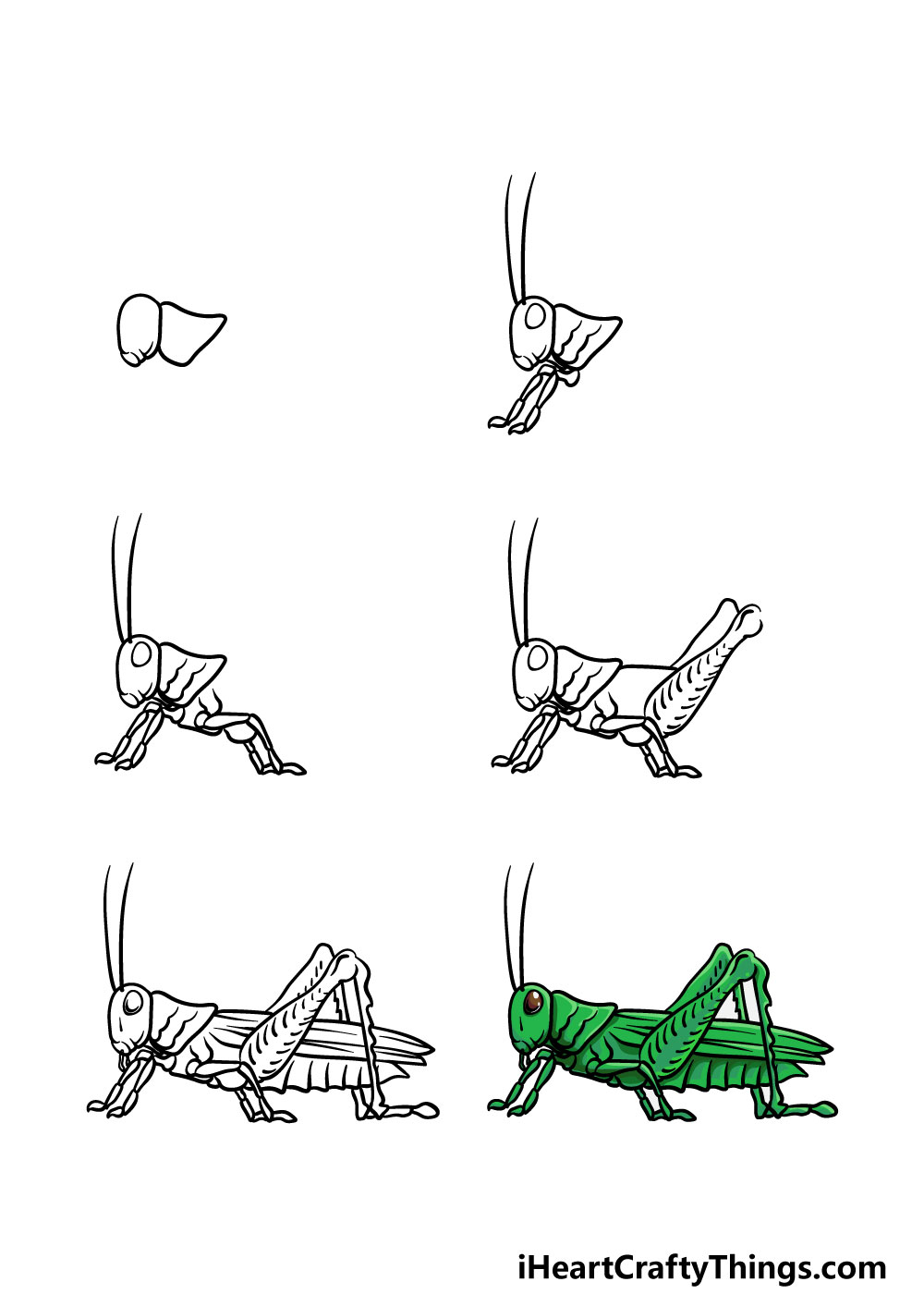 how to draw a grasshopper in 6 steps