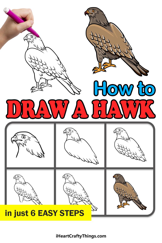 cómo dibujar un halcón en 6 sencillos pasos