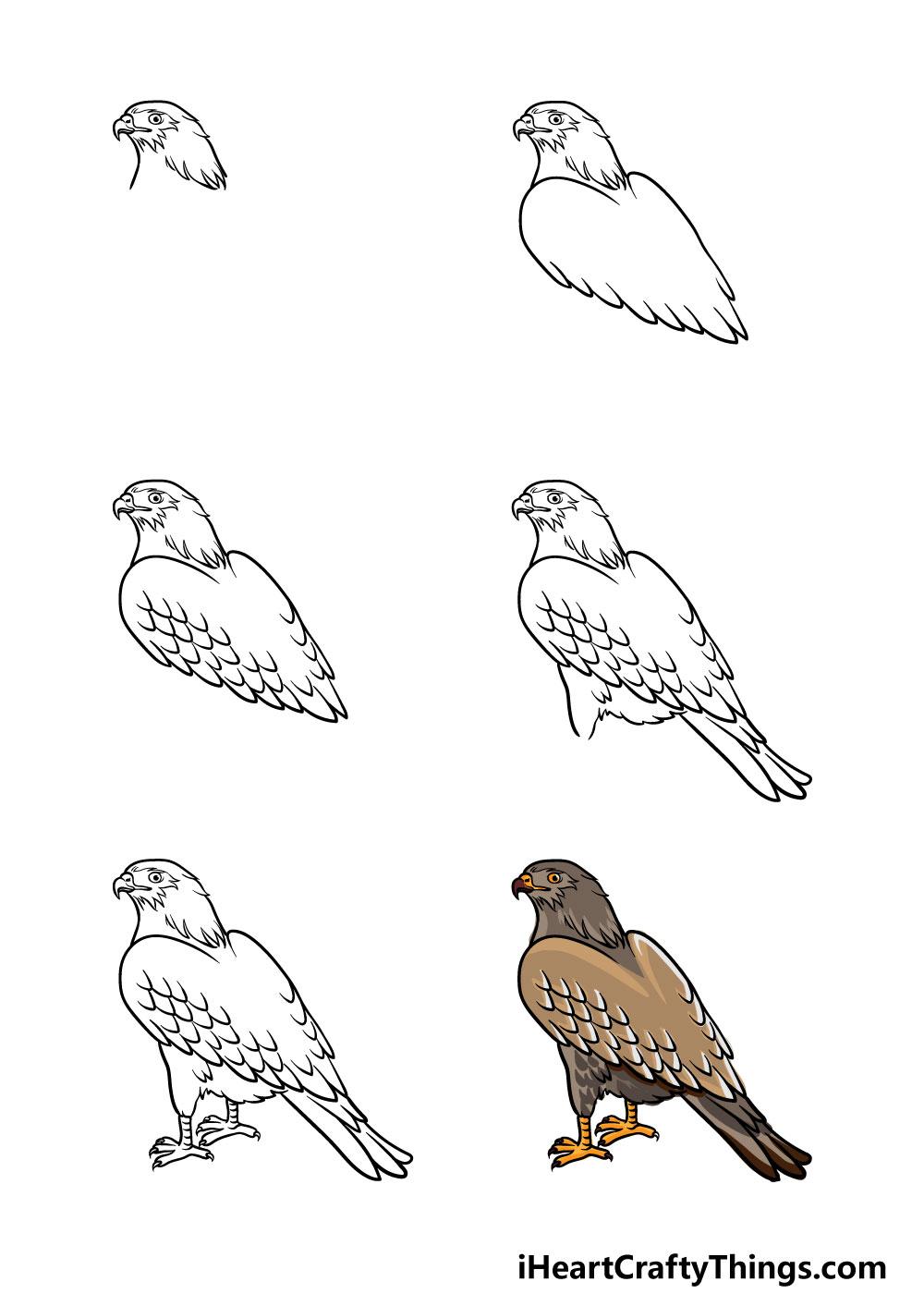 cómo dibujar un halcón en 6 pasos