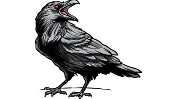 how to draw raven image