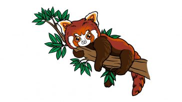 how to draw a Red Panda image