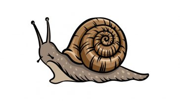 how to draw a snail image