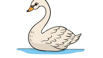 how to draw a swan image