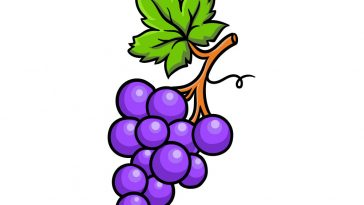 how to draw grapes image